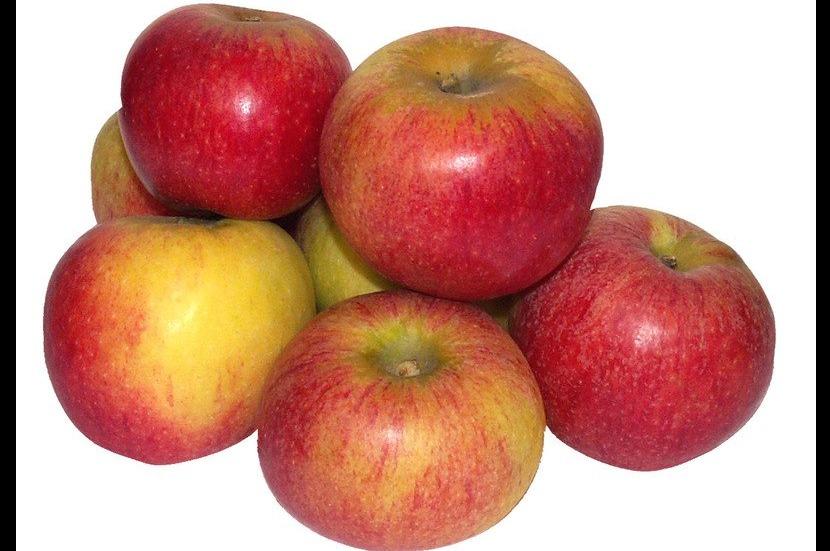 Santana voor appel allergie